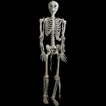 Full Size Skeleton Prop