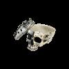 Horned Steampunk Skull Box