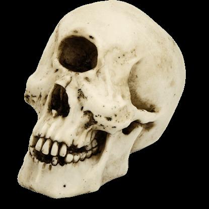 Skull of the Cyclops Polyphemus