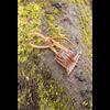 Elven Leather Holster Hook