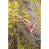 Elven Leather Holster Hook
