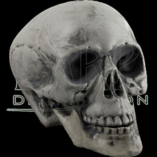 Plastic Skull Prop