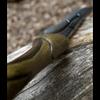 Wood Elf LARP Dagger